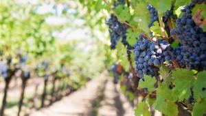 industria del vino