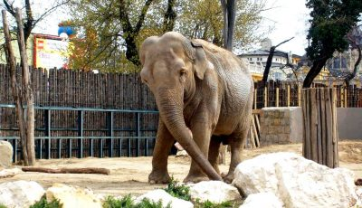 Zoo di Chisinau